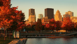 Beautiful City In The Fall