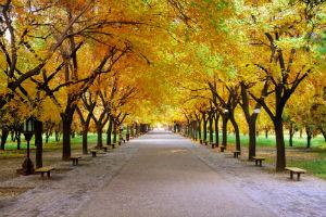 Empty Street In The Fall
